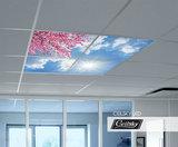 Bloesem LED fotoplafond
