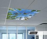 Bomen LED foto aan plafond
