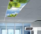 Palmen foto in systeemplafond