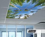 Bomen foto plafond ceilsky