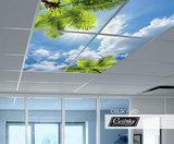 Palmen foto plafond ceildky