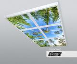bomen opbouw ceilsky fotoplafond ceilsky