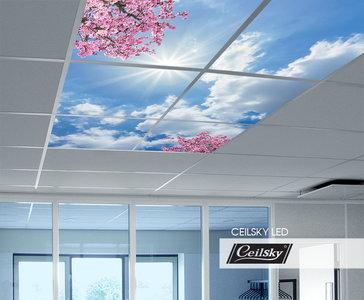 Ceilsky fototplafond